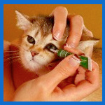 Echo Pharmacy Offers Veterinary Compounding